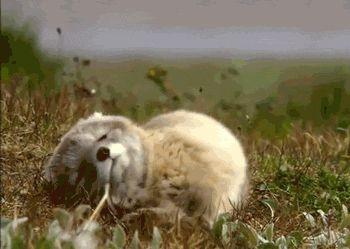 Cute Little Animal gifs