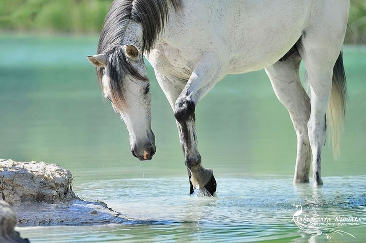 Beautiful, magical looking water horse. I love the colours of this photo.