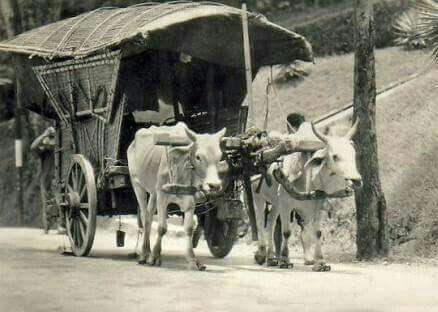 Gerobak sapi, transportasi jaman dulu