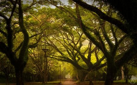 the green forest Photo by alfred chaniago — National Geographic Your Shot