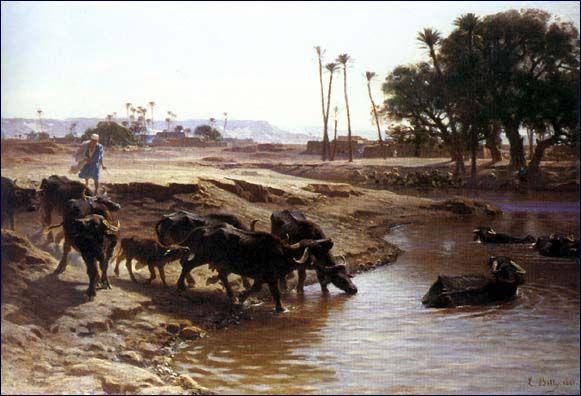 Βουβάλια στο Νείλο 1861