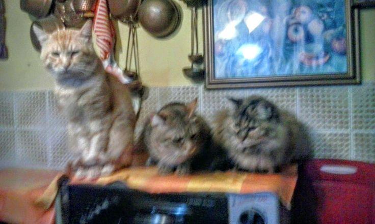 Astuzia+felina+e+gatti