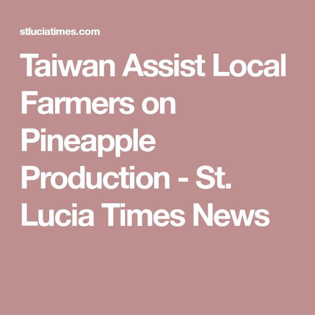 Taiwan Assist Local Farmers on Pineapple Production - St. Lucia Times News