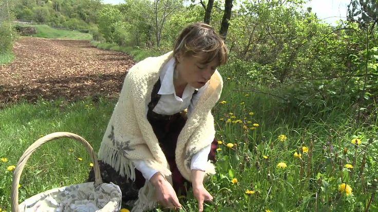 erbe del Carso Triestino raccolte & raccontate da Bernarda,