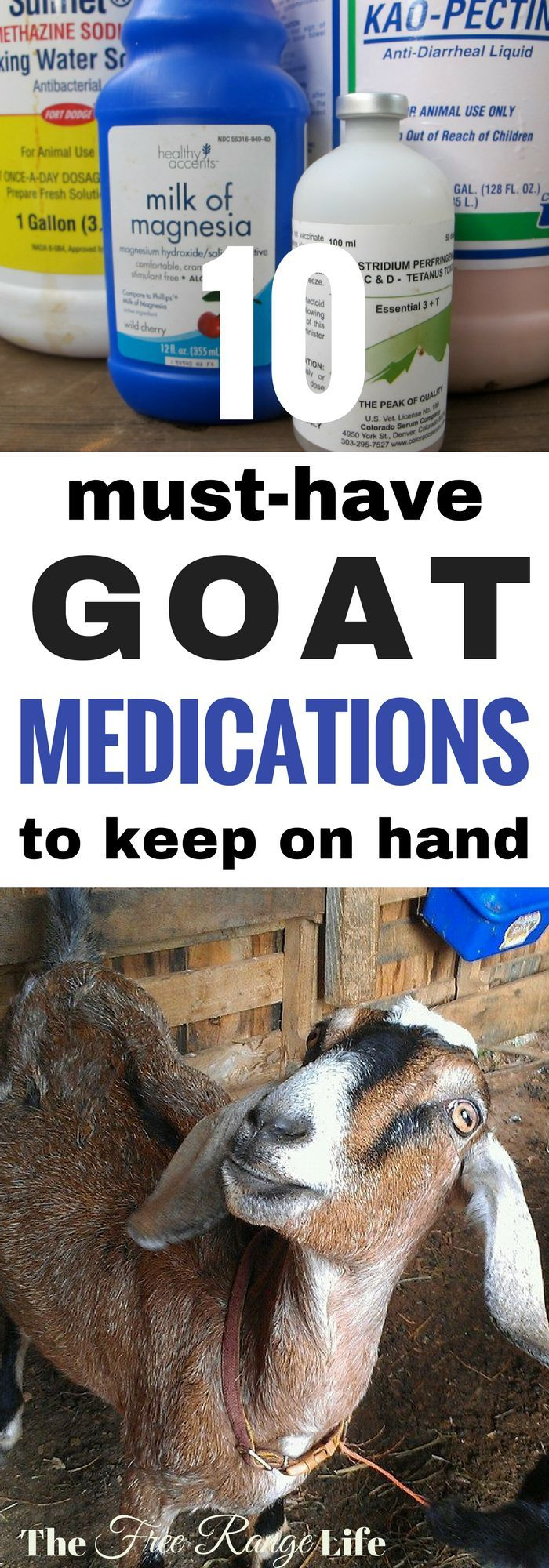 Raising goats can keep you on your toes! Don't be caught unprepared with a sick goat. Keep these 10 medications on hand at all times so you are ready when you goats need you.
