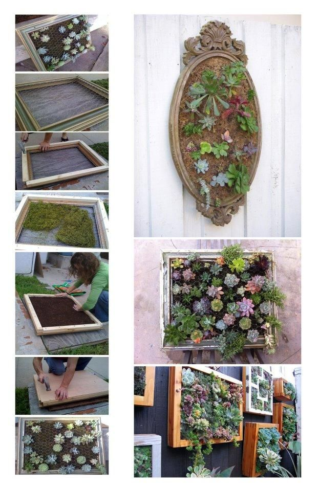 This is the perfect vertical gardening -- succulents. They love hot sun, they require little water, and many varieties stay compact. We'd have to be sure to use hardy species since we don't have a bright enough place inside to overwinter one.