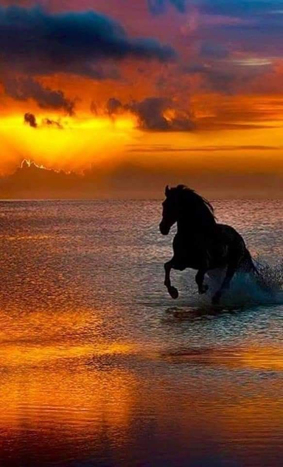 Pin By Sci Le Cedre On Horses Beautiful Horse Pictures Most Beautiful Horses Horse Photography