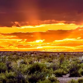 Sunset at Coward Springs, Australian Outback
