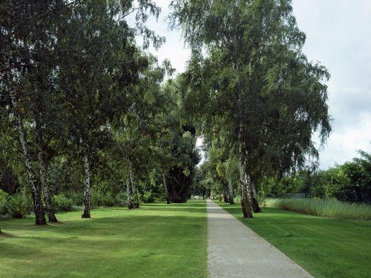 relais Landschaftsarchitekten. Maselakepark Berlin Spandau. Wiese. Weg. Birken