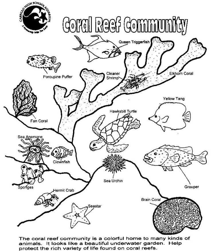 ocean plants coloring pages adults | coral colors coral reef plants reef fish nice reference for fish ...