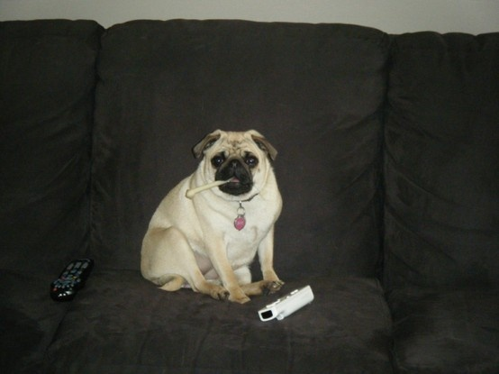 The Worlds Fattest Pug: 1000+ Images About Fun Stuff The Kids Pin On Pinterest