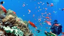 Scuba Diving in Padangbai for Certified Divers, Bali, Scuba Diving