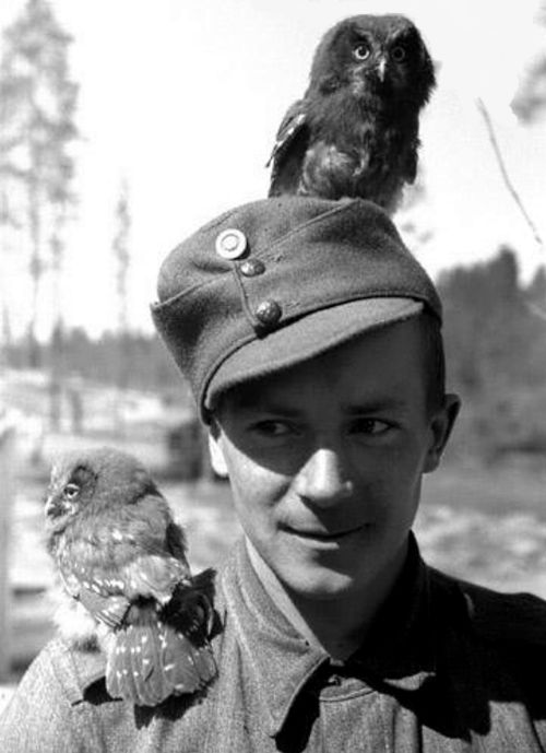 A Finnish soldier becomes mother to two orphaned owls during the Finnish-Soviet Continuation War. 1942.