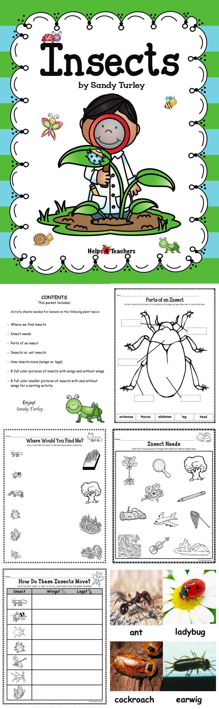 $ FANTASTIC. 16 pages. Everything you need to teach lessons on insects. Activity sheets included are: -Where do we find insects -Insect needs -Parts of an insect -Insects vs. not insects -How insects move (wings vs. legs) Also includes: 8 full color pictures of insects with wings and without wings -8 full color smaller pictures of insects with and without wings for a sorting activity