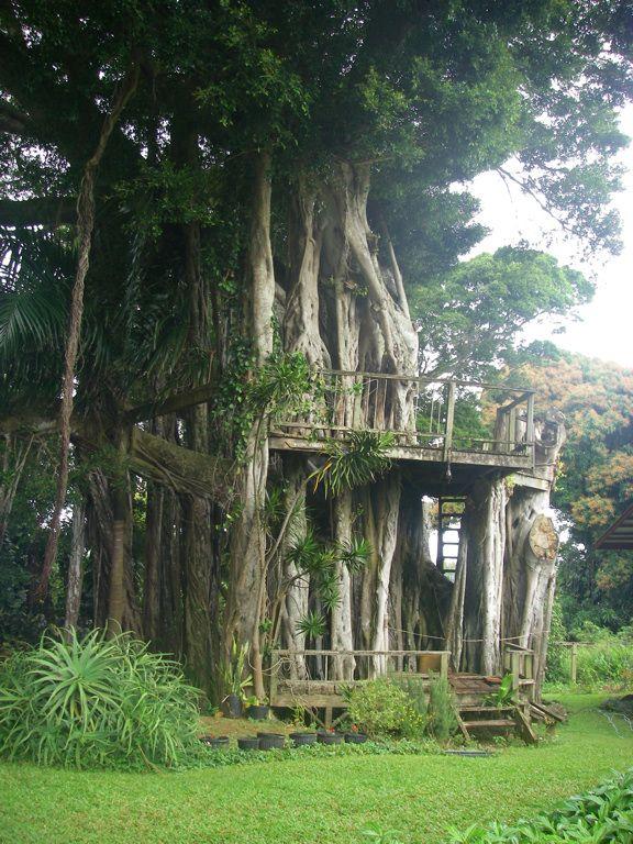 A lovely tree house we saw on Kauai Island, Hawaii ...