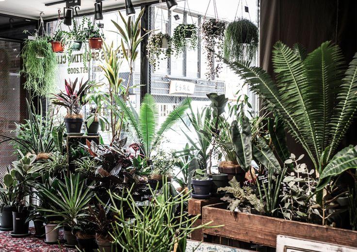 Freeman Sporting Club Futakotamagawa GREEN FINGERS 植物