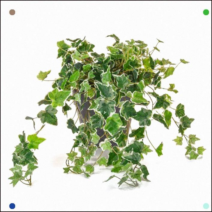English Ivy Bush Desktop Plant In Pot Plants Artificial Plants And Trees Hanging Plants