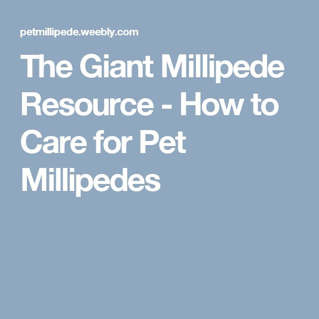 The Giant Millipede Resource 	 	 - How to Care for Pet Millipedes