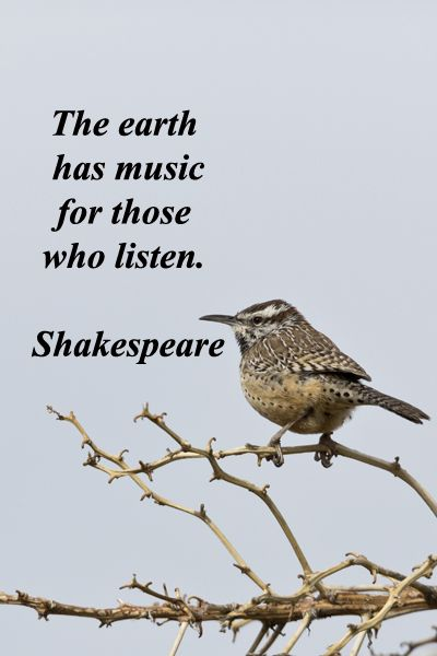 """""""The earth has music for those who listen."""" -- Shakespeare – On image of cactus wren taken in Arizona by Florence McGinn – Nature teaches valuable lessons."""