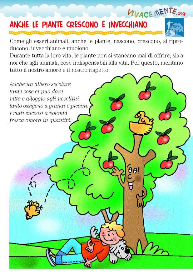 Anche le piante, come noi, nascono, crescono, invecchiano e poi muoiono. Ci sono piante che vivono una sola stagione altre come gli ulivi c...