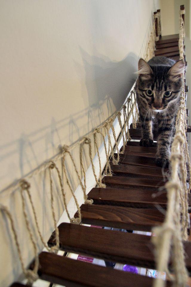 Best 25 Cat Walkway Ideas On Pinterest