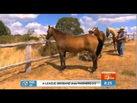 Footage of the 2013 Man from Snowy River horseback ride offered by Lovick's High Country Adventures. Visit manfromsnowyriver.net for information about The Man from Snowy River films, including behind-the-scenes details. (Originally aired on Australian TV Channel 7 Sunrise program.)