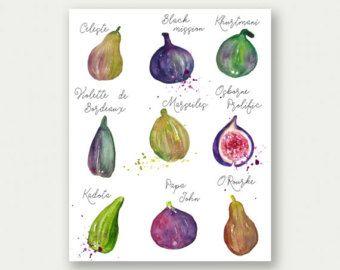 Abb. print Aquarell Bild malen Obst-Plakat Küche von lucileskitchen
