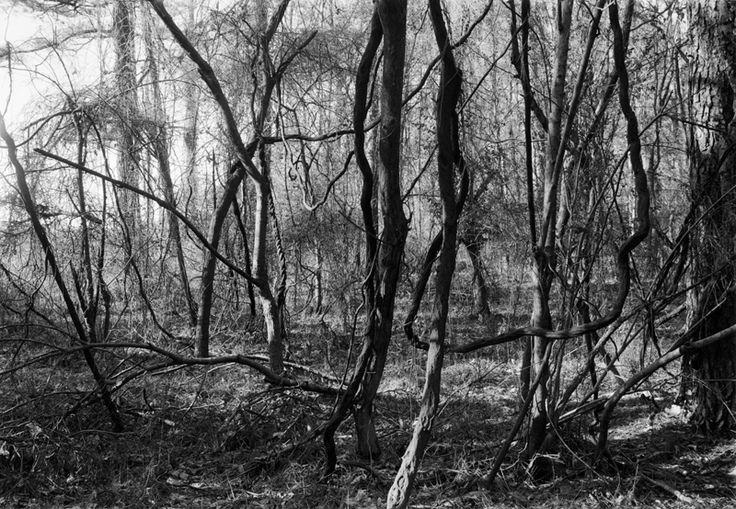 05. Sandy Creek (1998)