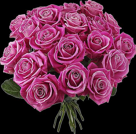 Decent Image Scraps: Beautiful Roses 5