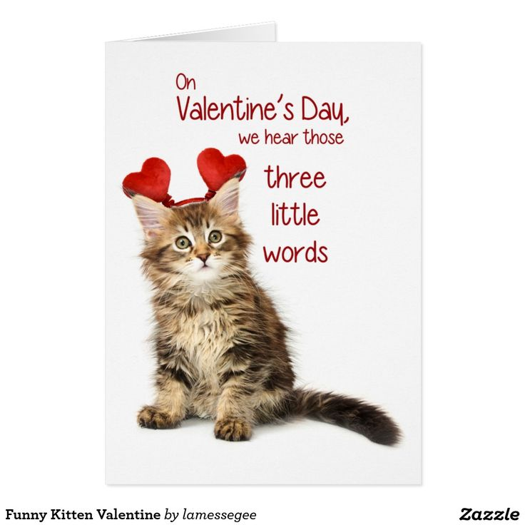 grumpy cat wedding invitations%0A Funny Kitten Valentine Card
