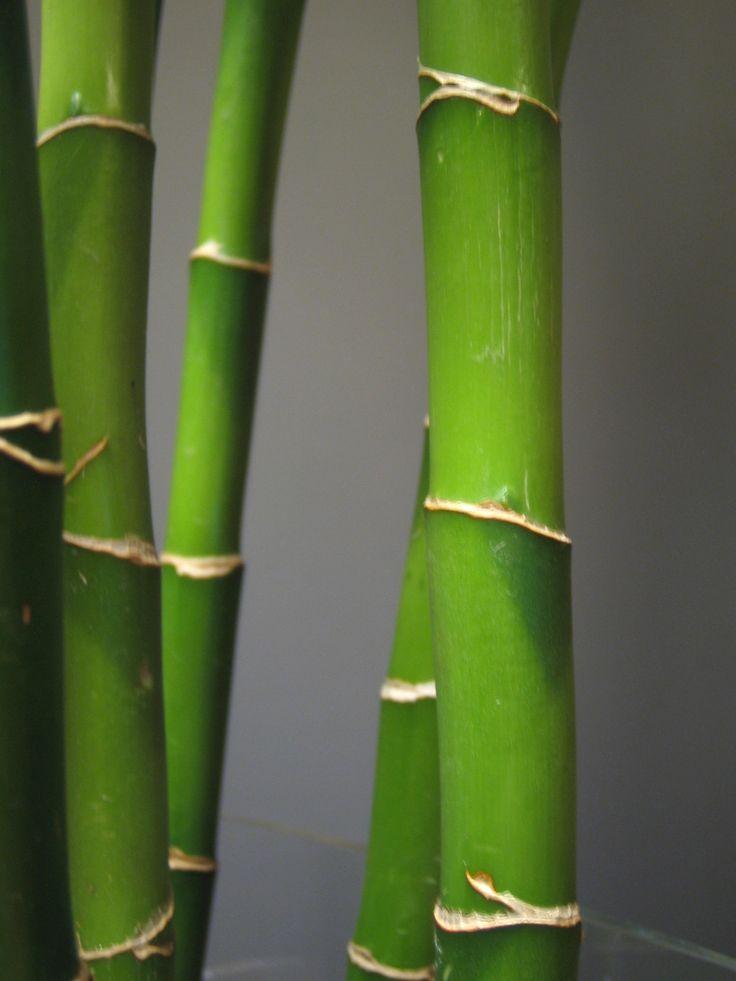 El cuento del bambú japonés