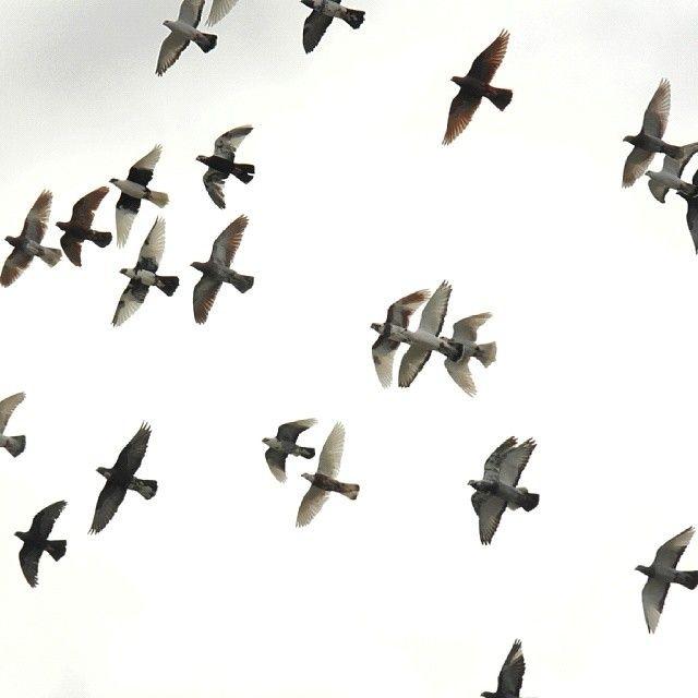 26 vind-ik-leuks, 10 reacties - Zakaria Rakha (@zakariarakhaphotography) op Instagram: '#1/1000 #f5 #ISO400 #highshutterspeed #superfast #flockOfBirds #birds #pigeons #cloudySky…'