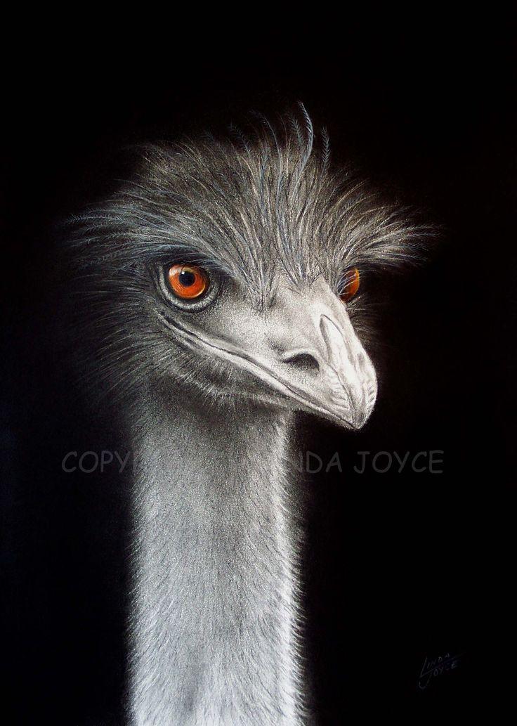 """Emu With Attitude"""