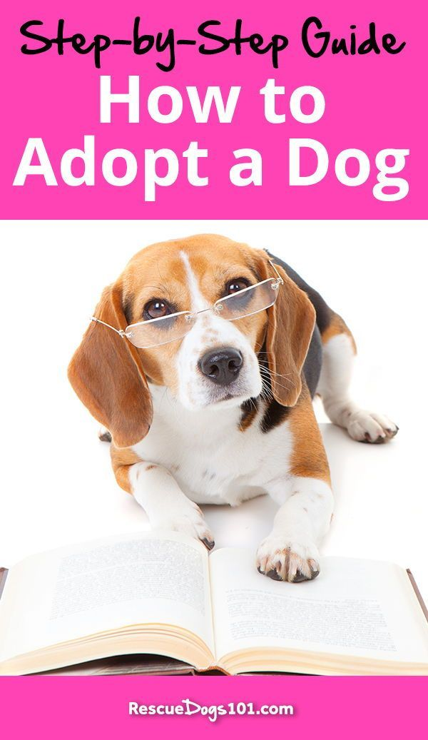 Creating Your Perfect Family Dog Adopt Love Train Dogs