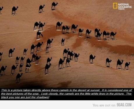 My mind is blown. Read the pic description and look closely.