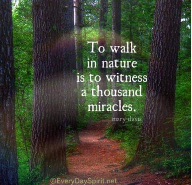 Pin By Michele Sartin On Find Me Under The Shady Tree In 2020 Nature Quotes Mother Nature Quotes Nature Quotes Beautiful