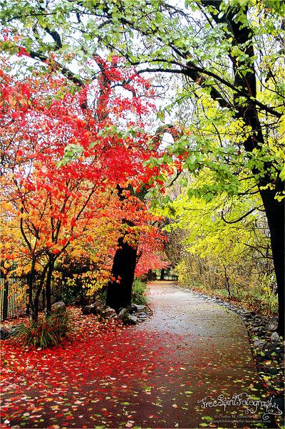 Sacramento River Trail Fall Colors.  Photo by: Free Spirit Fotography
