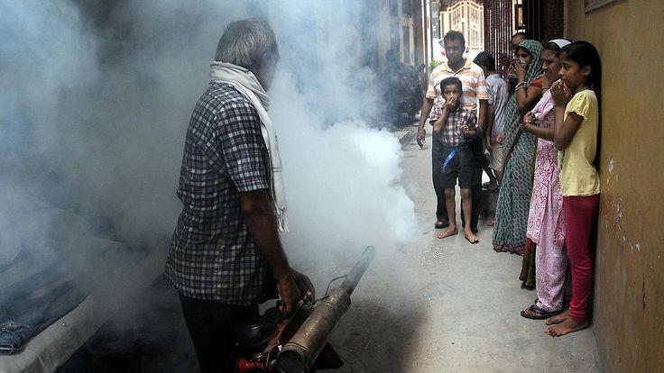 Vernebelung gegen Mücken-Invasion: Neu Delhi kämpft gegen Dengue-Fieber
