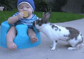 """""""That damn rabbit stole the cookie from me!"""""""