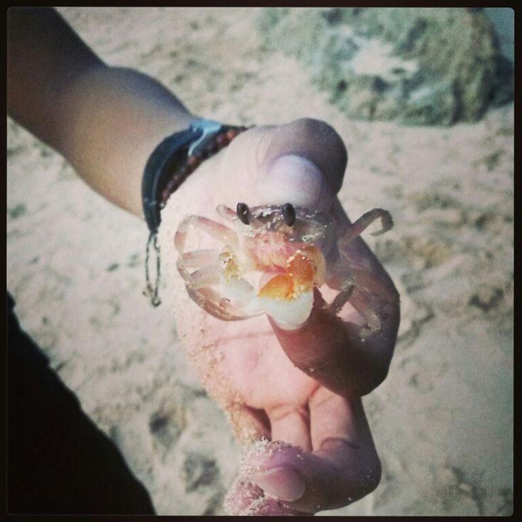 Hello, i'm mr. Crab! Where the squrepants?