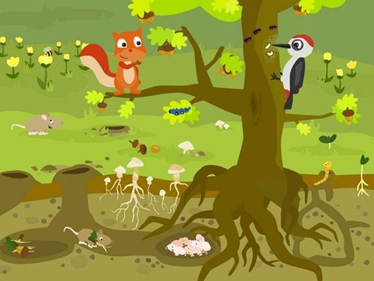 Cartoon Characters 3 Apples High : How to tell if apples on your tree are ripe steps