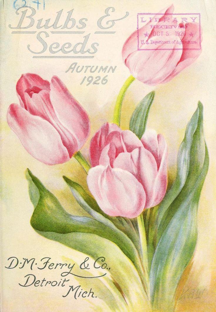 Bulbs & seeds : autumn 1926