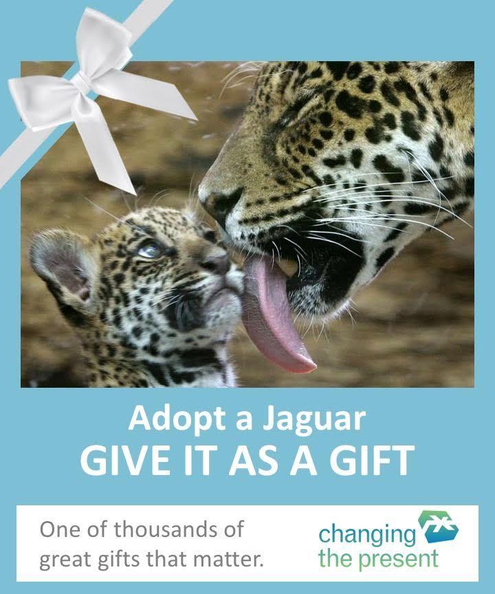 Adopt A Jaguar Adoption Jaguar Visit Arizona