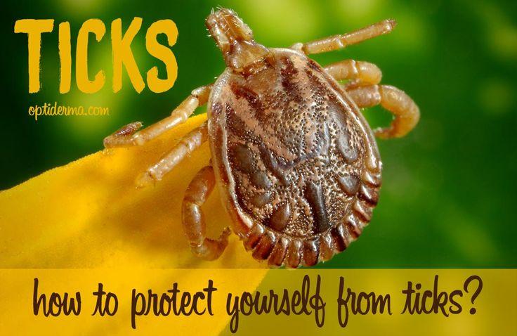 How to use rose geranium essential oil as a natural tick repellent