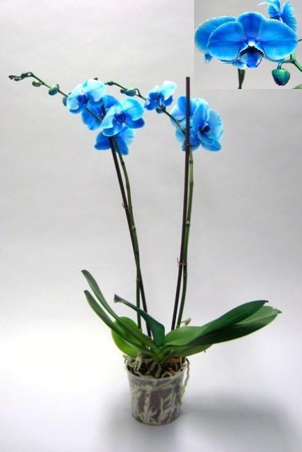 Orchideeën online bestellen