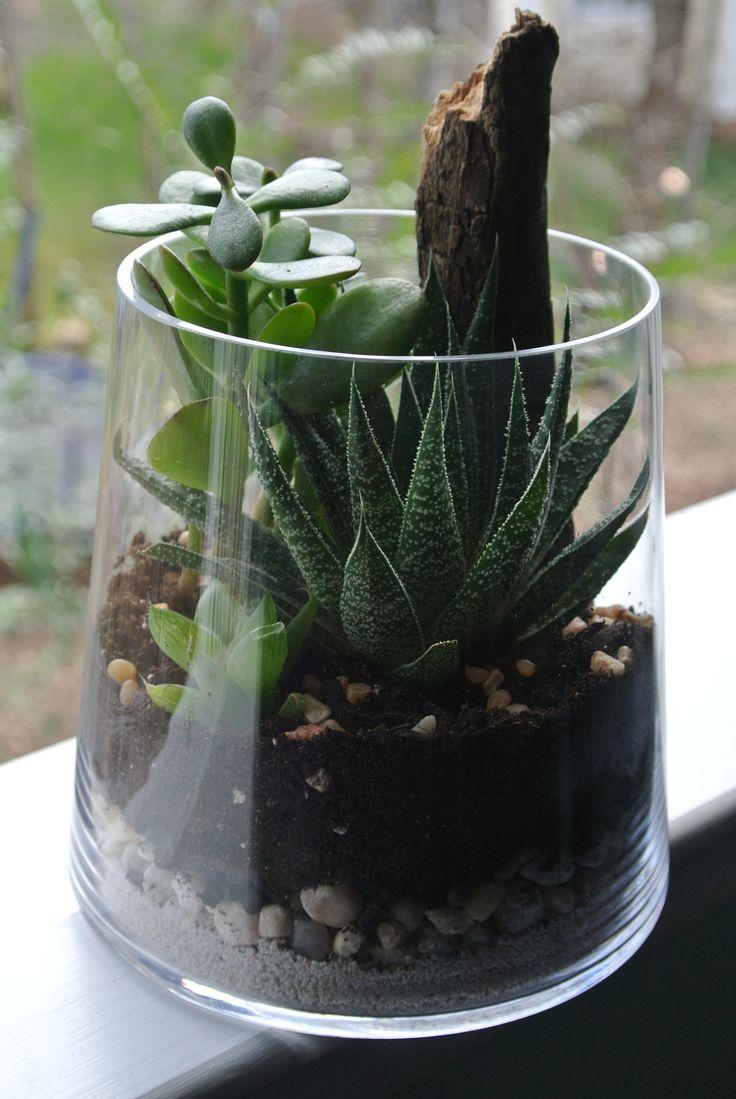 Plantes et verdure