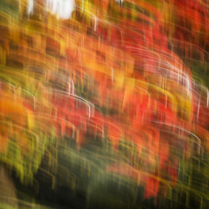 Photography | Alexandre Arnaoudov | Wind In The Maple Tree
