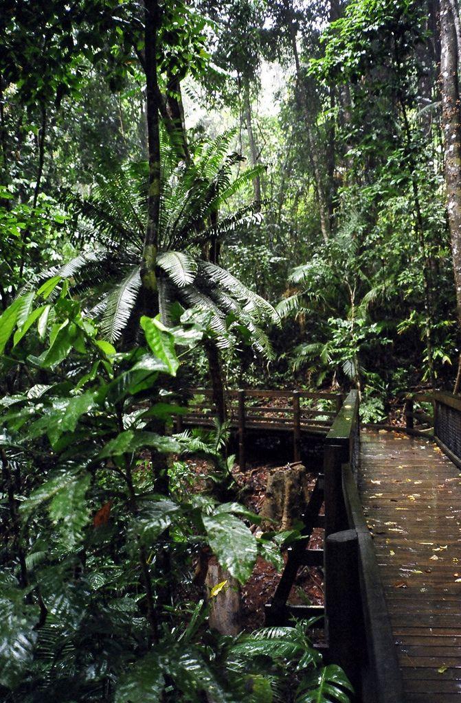 Daintree Forest Queensland, Australia
