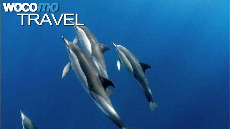 Gewaltige Urkräfte formten einst die Azoren. Vulkane prägen bis heute die neun Inseln mitten im Atlantik, die zum 1600 Kilometer entfernten Portugal gehören. Das Meer ist hier sehr tief und durch den warmen Golfstrom besonders nahrungsreich. An kaum einem anderen Ort der Welt leben deshalb so viele Wale und Delfine.   #ARTE #Azoren #delfine #GEO-Magazin #GEO-Reportage #Madeira #PLAY_GEO_GF #Portugal #pottwal #Wal #wale #whale #Whale Watching