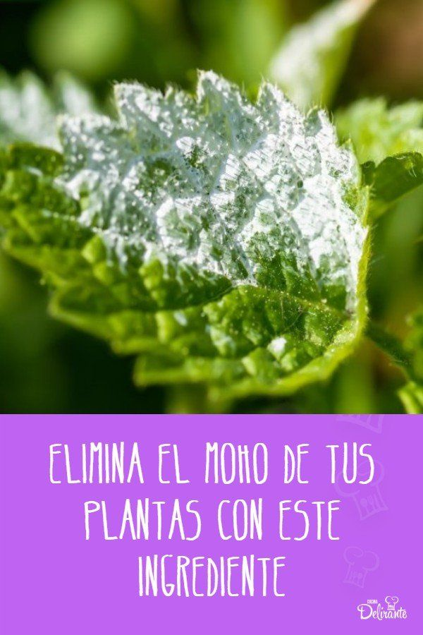 Elimina el moho de tus plantas con este ingrediente Cactus, Herbs, Vegetables, Tips, Nature, Mantel, Random, Gardens, Rustic Gardens